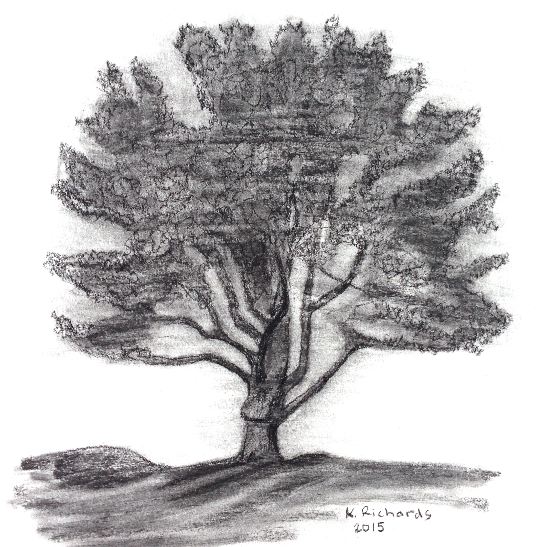 how to draw a tree with charcoal pencils