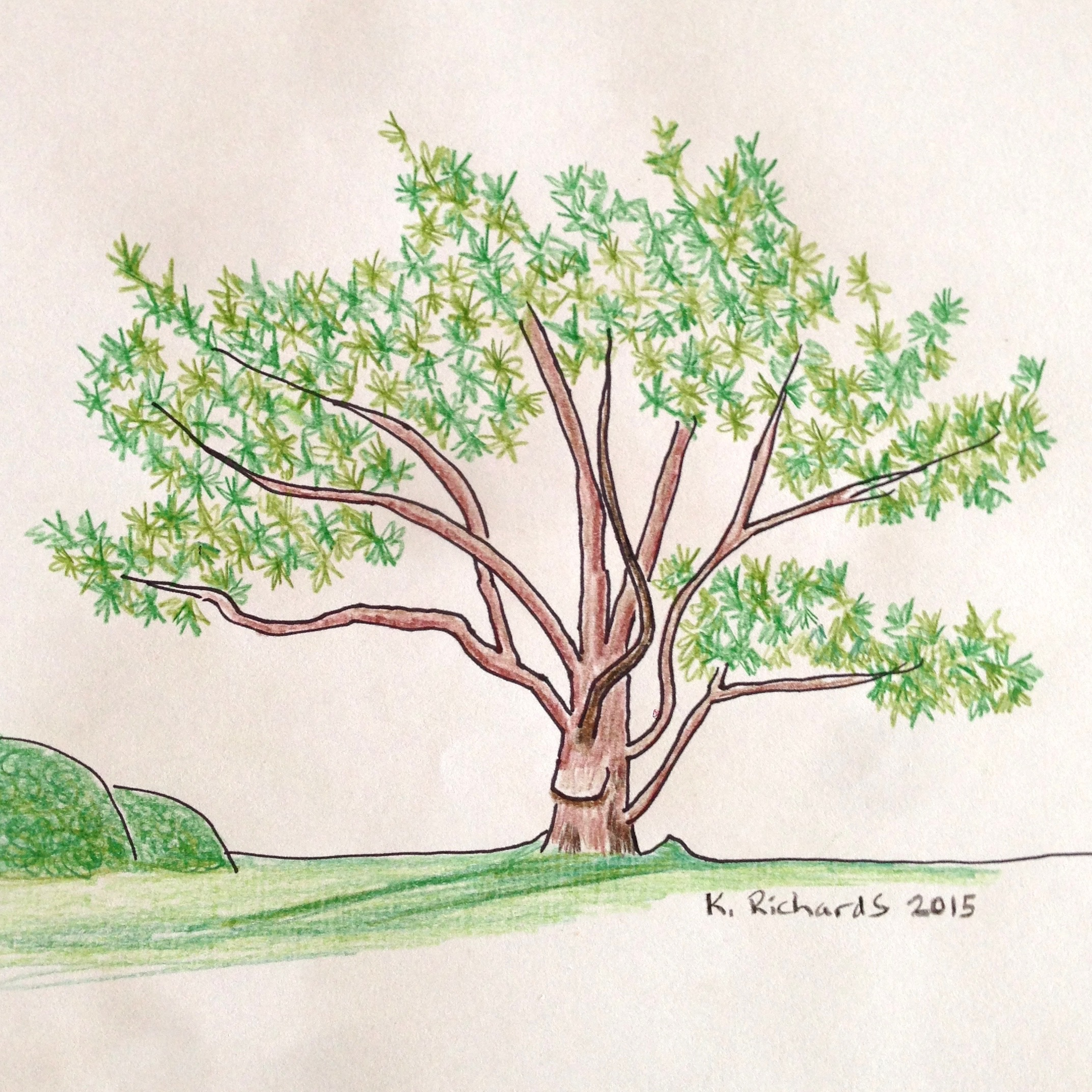 Tree Drawing 30: From Memory | TickleHead