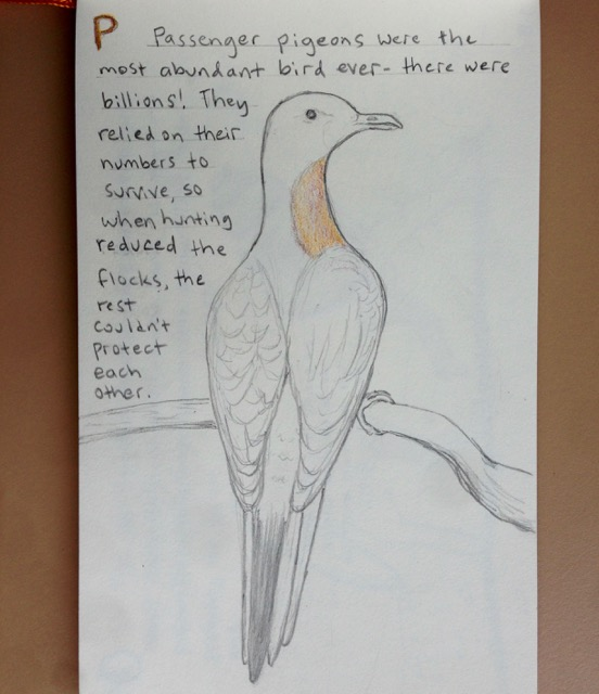 Image of: Prehistoric The Passenger Pigeon Is Probably In The Top 10 Of Species People Would Name As Extinct Thats Because It Was The First One In The Us To Die Out With The Free Coloring Pages Extinct Animals Ticklehead