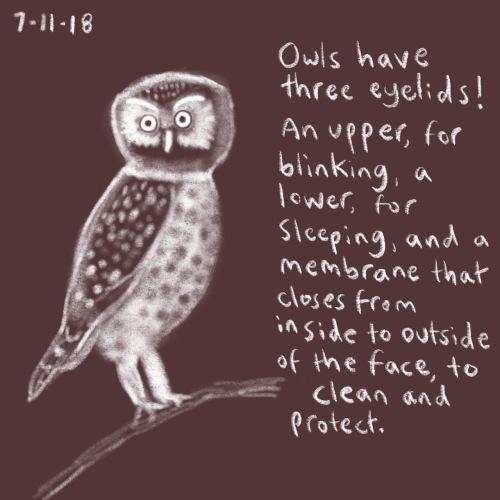 95/100 owl