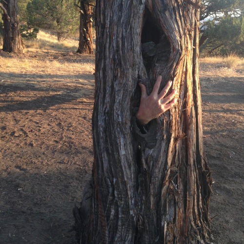 PP: treehand